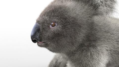 Koala Hair Fur Rigged Animal