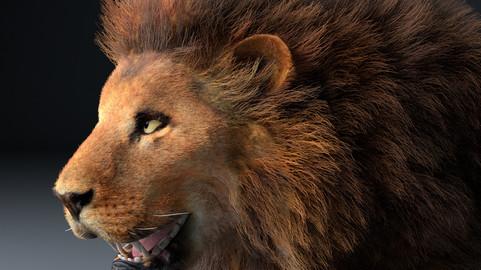 African Lion Hair Fur Rigged Animal