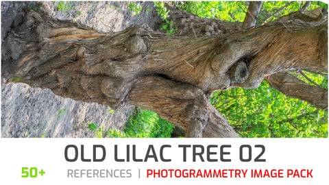 Lilac Tree Trunk #2 Photogrammetry image pack