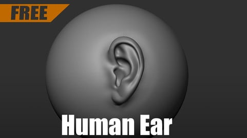 Sample Human Ear