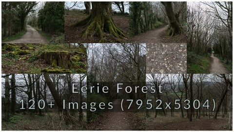 Eerie Forest Photopack 120+ Images