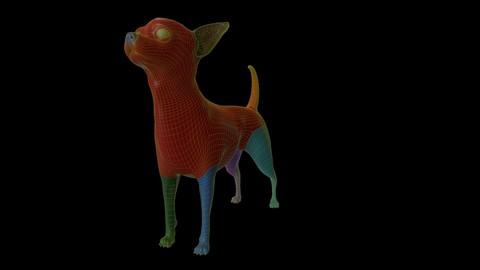 chihuahua BaseMesh 3D model