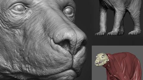 BEAR- Blackbear – sculpt/retopology/skeleton/muscles/uvs