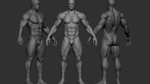 Male Anatomy Figure (Base Mesh)