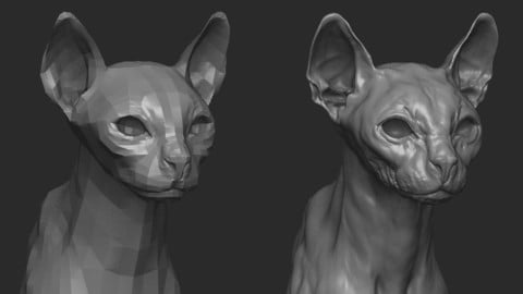 Cat bust basemesh
