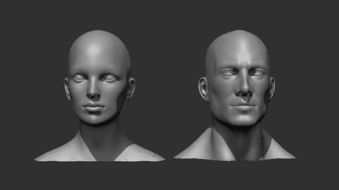 Male and Female Head Realistic Base Mesh 3D Model