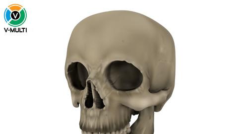 3D Model: Skull