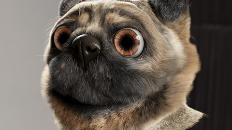 Pug Head with Fur (Blender)