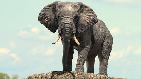 African Elephant Rigged model