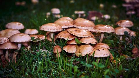 Free mushrooms pack
