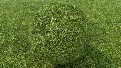 Grass (227) - Photogrammetry based Environment Texture