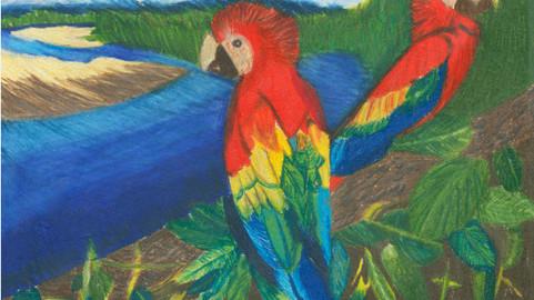 Macaws - Digital