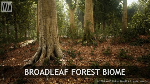 UE4 - BROADLEAF FOREST BIOME