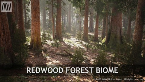 UE4 - REDWOOD FOREST BIOME