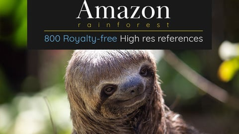 Amazon Rainforest Full: 800 Royalty free photos