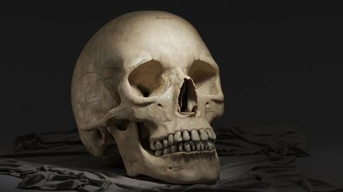 Human Female Skull