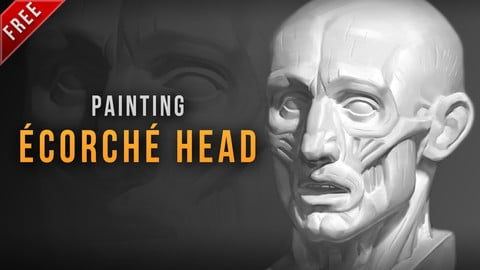 Ecorche head painting process