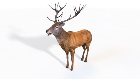 Stag 3D Model