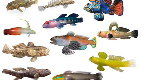 Aquarium Goby Fish 3d model collection