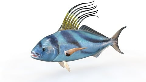 Rooster fish 3D Model