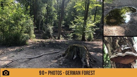 German Forest - 90+ Photos