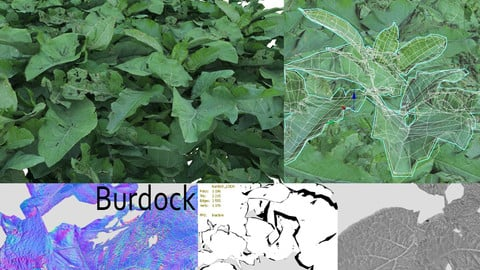 Arctium aka Burdock leaves 4k pbr