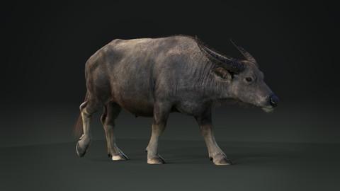 Asian buffalo 3D model