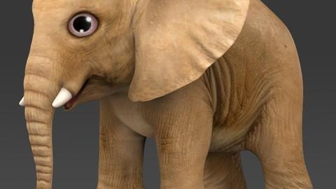 3D Baby Elephant