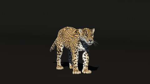Panthera onca 3D model