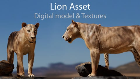 Lion - Digital model and Textures