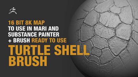 Turtle Shell Brush + 16bit 8k Map