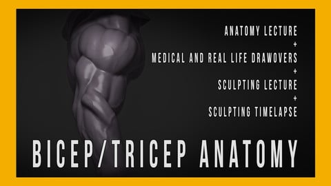 Bicep/Tricep Anatomy for Sculptors