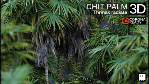 Chit palm (Thrinax radiata) Collection