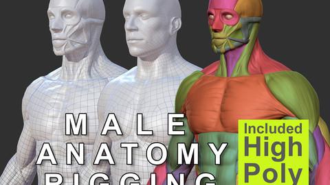 Character - Male Anatomy Skin Ecorche