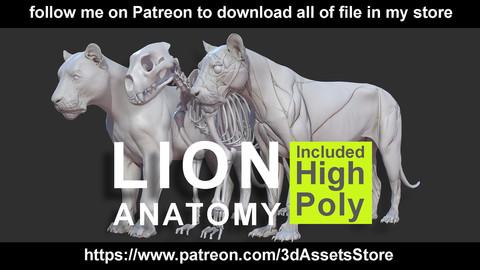 Animals - Lion Anatomy Skin Ecorche