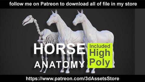 Animals - Horse Anatomy Skin Ecorche