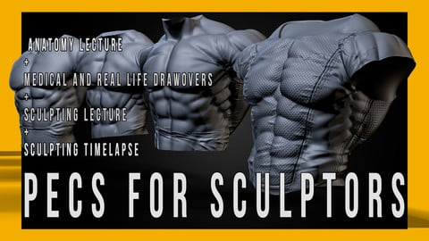 Pecs for Sculptors
