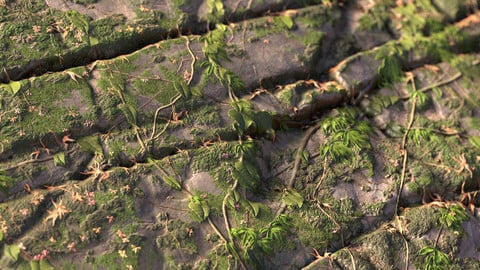 Substance Overgrown Rock