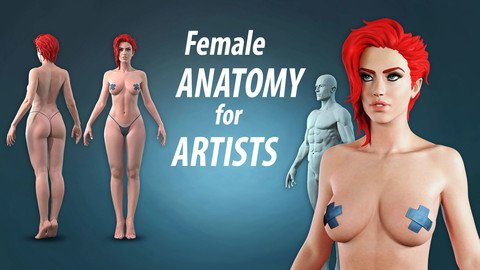 Female anatomy for artists course