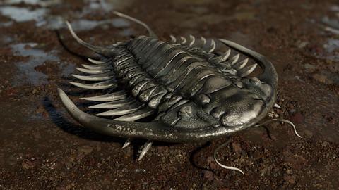 Trilobite 03 - PARACERAURUS EXSUL