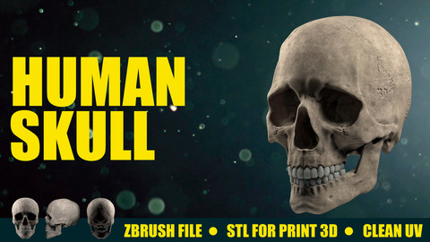 Human Skull - Render and Print 3D