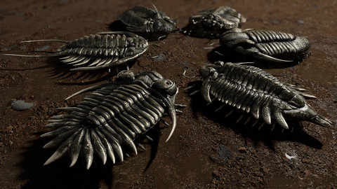 Trilobites Collection