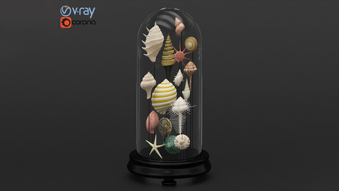 Seashell Decorative