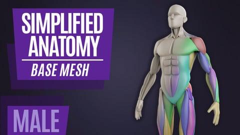 Simplified Anatomy Basemesh - Male