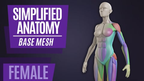 Simplified Anatomy Basemesh - Female