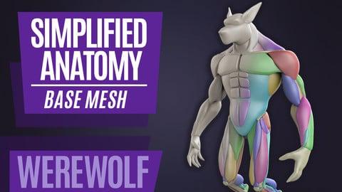 Simplified Anatomy Basemesh - Werewolf