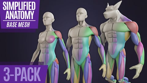 Simplified Anatomy Basemesh - 3-Pack