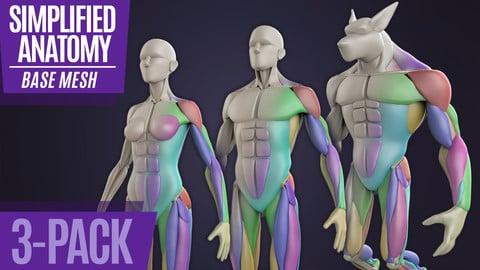 Simplified Anatomy Basemesh - 3-Pack
