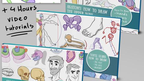 Anatomy complete bundle