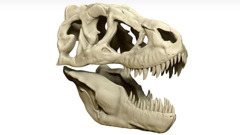 Tarbosaurus Skull Sculpt Project
